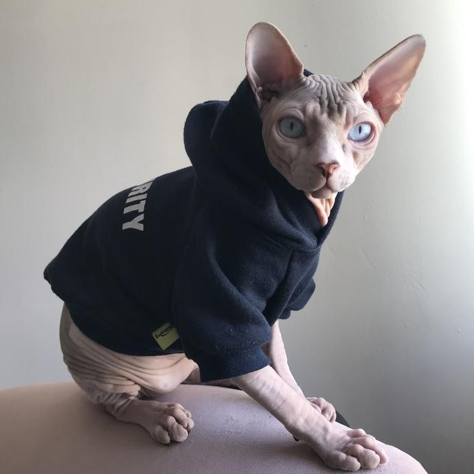 Kediniz sakin mi yoksa hareketli mi?