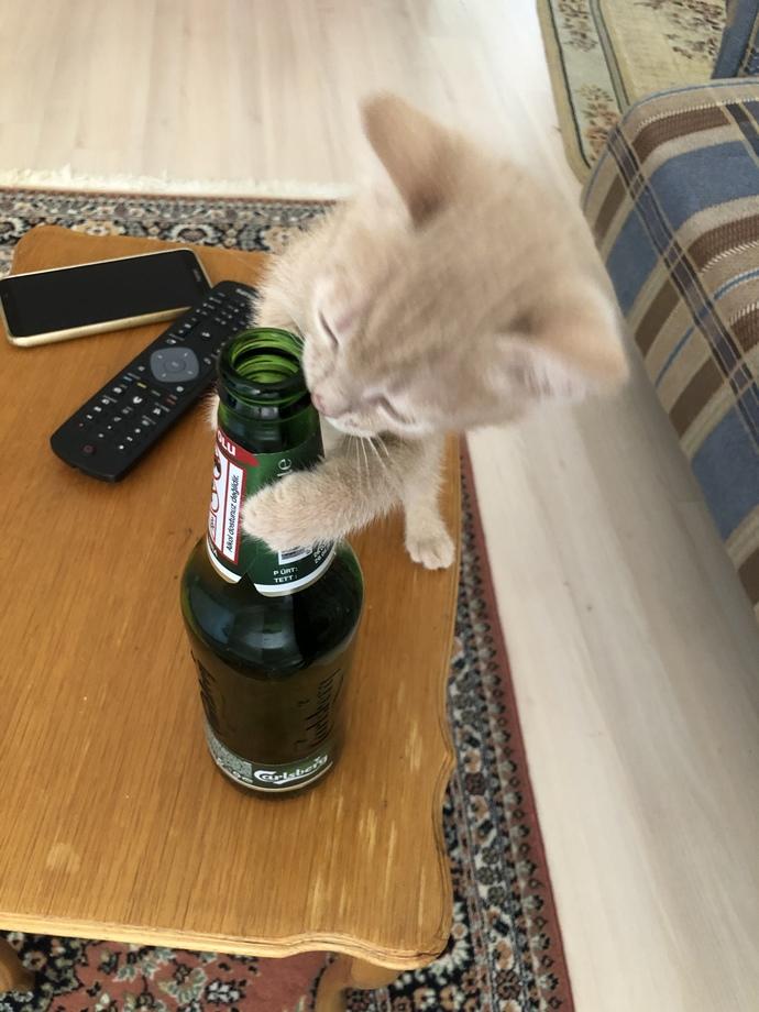 Kedim her şeyi oyuncak zannediyor, ne yapayım?