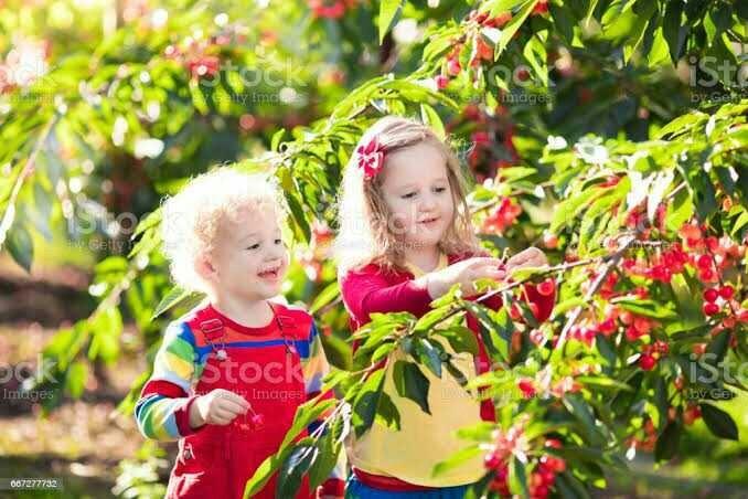 Sen hiç bahçeden sebze meyve topladın mı?