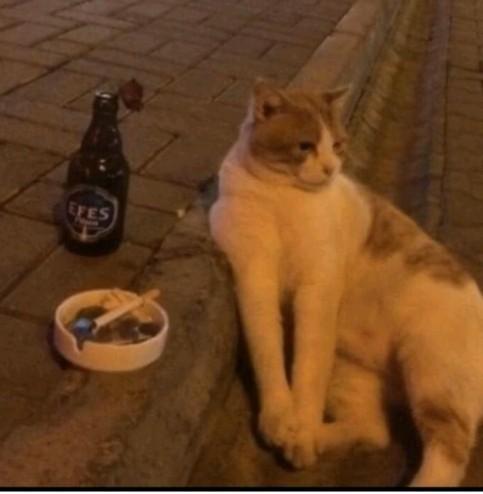 Arkadaşlar bu kedinin neyi var sizce 😒 ?