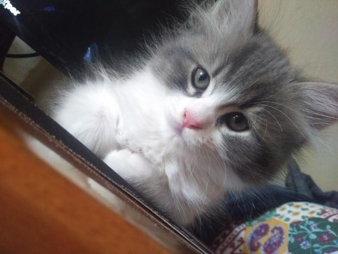 Bu kedi niye böyle üzgün duruyor?