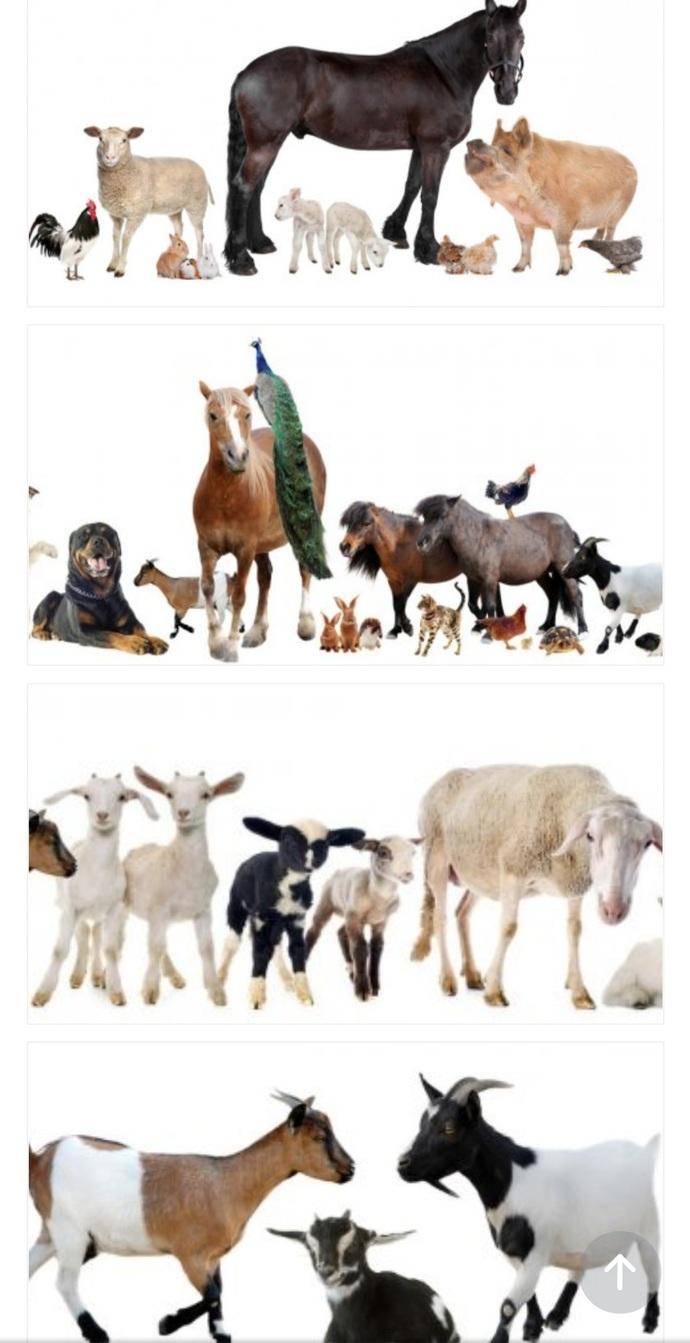Çiftlik kuracak olsanız çiftliğinize hangi hayvanları alırsınız?