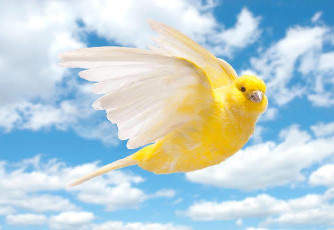 En sevdiğiniz kuş türü hangisidir?