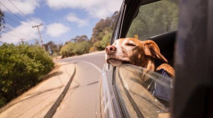 Evcil hayvanlarla yolculuk yapılır mı?