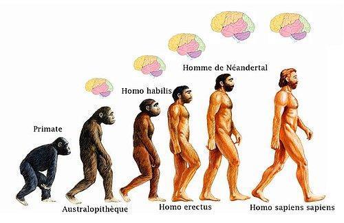 Maymunlarla aynı ataya sahip olmamız gururunuzu incitiyor mu?