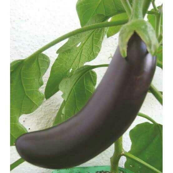 Ağzıma layık patlıcanı 🍆 nerden bulabilirim?