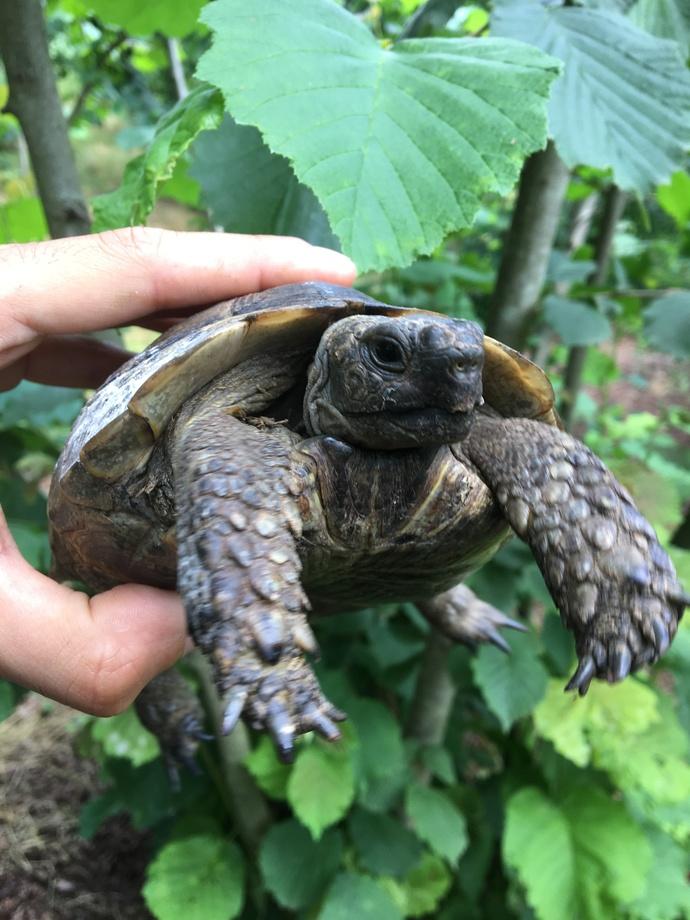 Kaplumbağa sever mi̇si̇ni̇z?