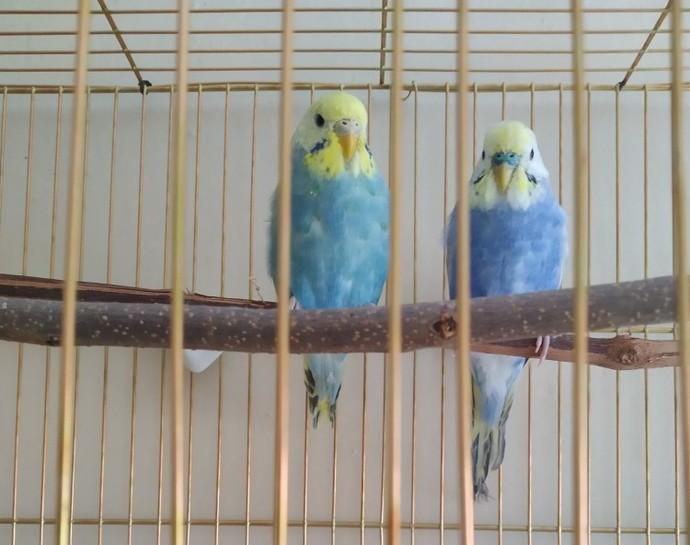 Kuşlarım nasıl?
