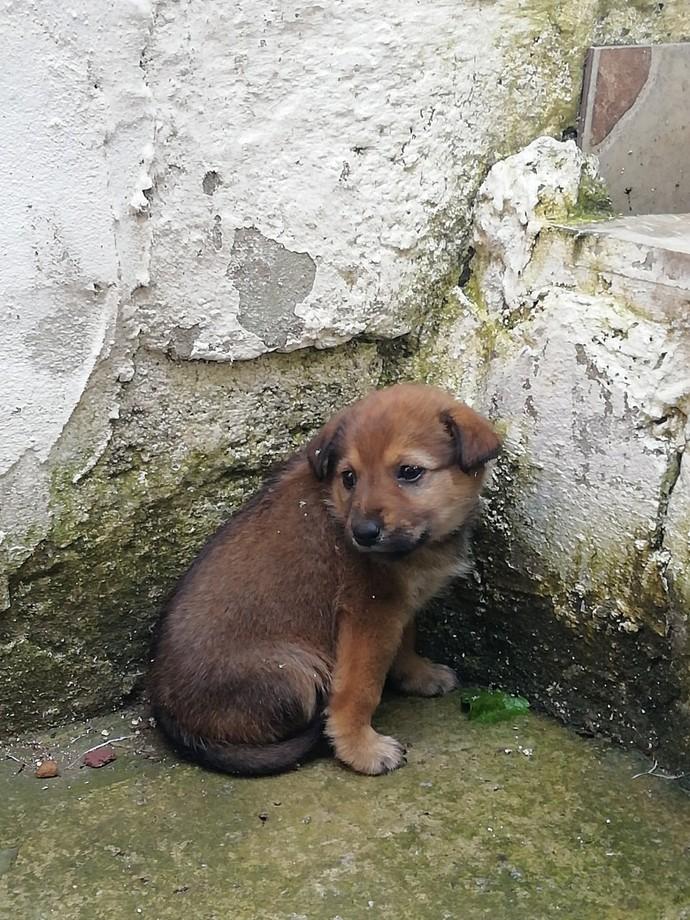 Bu köpeğe nasıl yardım edebiliriz?