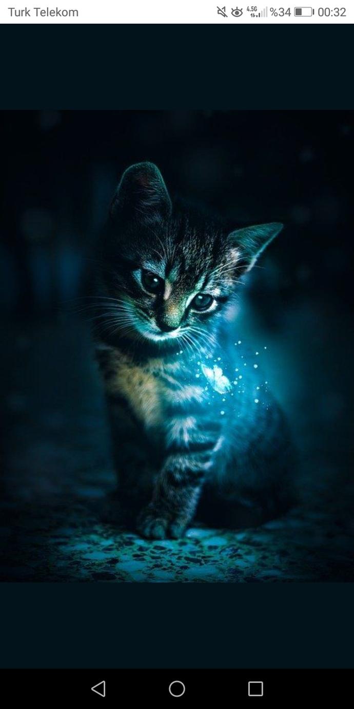 benim kedi yatsın yanıma mır mır mır etsin yeterli 😌😌