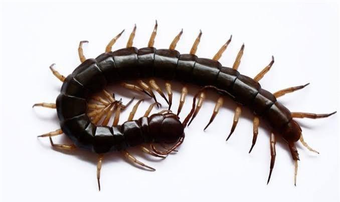 Evde beslendiğini duyduğunuz en garip hayvan neydi?