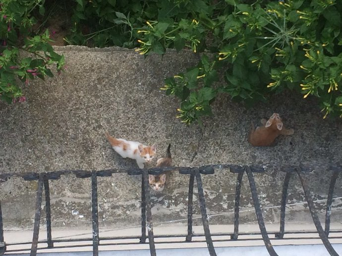 Bu kediciklere ne vereyim bilen var mı?