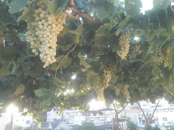 İmkanınız olsa evinizde hangi sebze/meyveyi yetiştirmek isterdiniz?