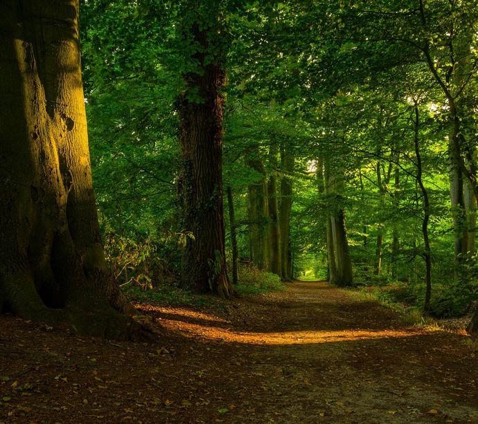Ormanlara girmek yasaklandı! Sizce tüm ormanlık alanlara giriş yasaklanmalı mı?