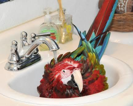 Evcillerinize banyo yaptırıyor musunuz?
