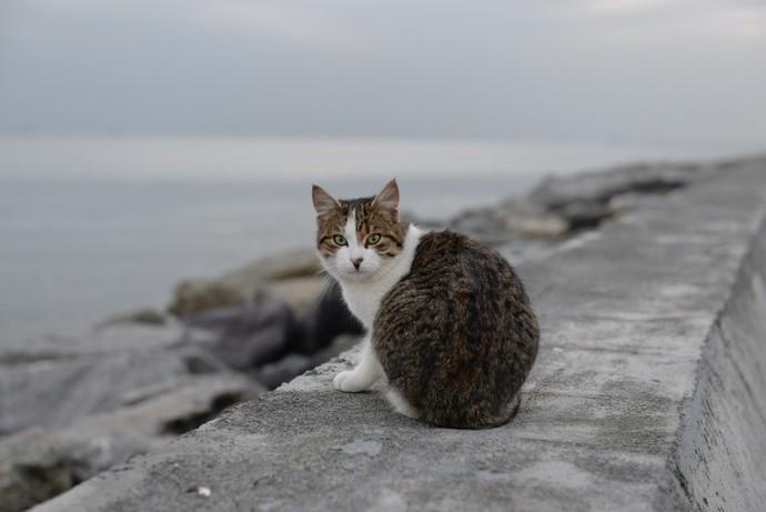 İstanbulun kedileri galibiyet alırlar mı?