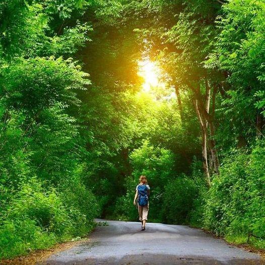 Ormanlar sizin için ne ifade ediyor?