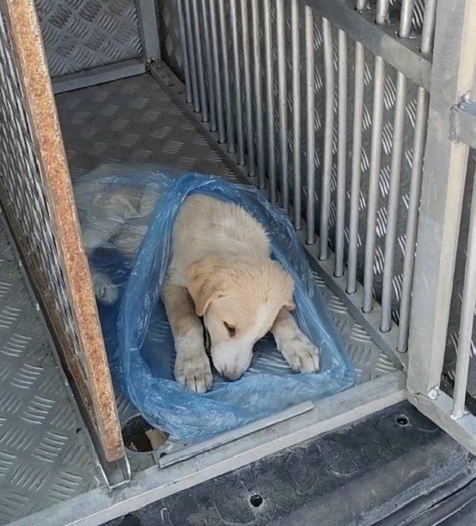 Orman yangınında patisi yanan bebek köpek ölmüş. :( Ne düşünüyorsunuz ?