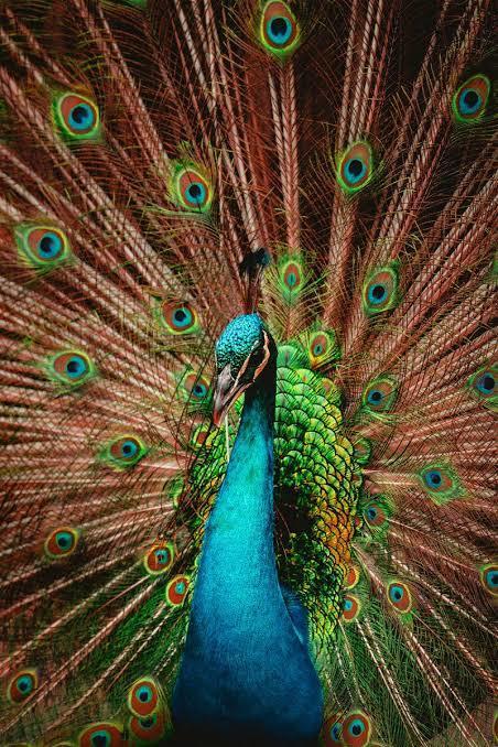 Kuş Cennetine Hoşgeldiniz