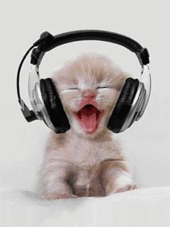 Bi insanın dinlediği müzikten nasıl biri olduğunu anlar mısınız?