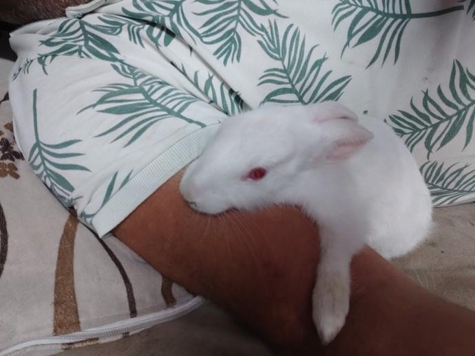 Tavşan beslemeyi bilen  var mı?