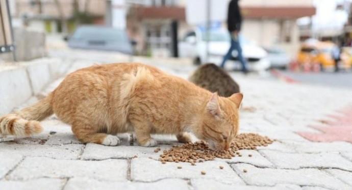 Sokak hayvanlarına mama desteğinde bulunuyor musunuz?