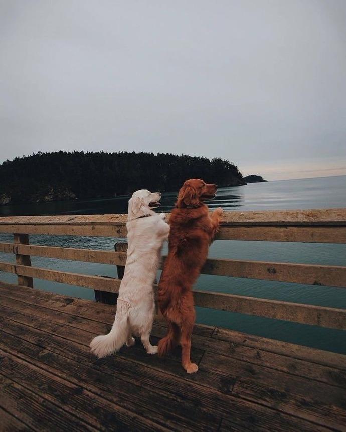 Hayvanları insanlardan daha çok sevmem normal mi?