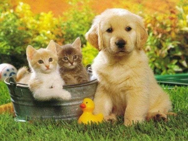 Büyürken evcil hayvanınız oldu mu?