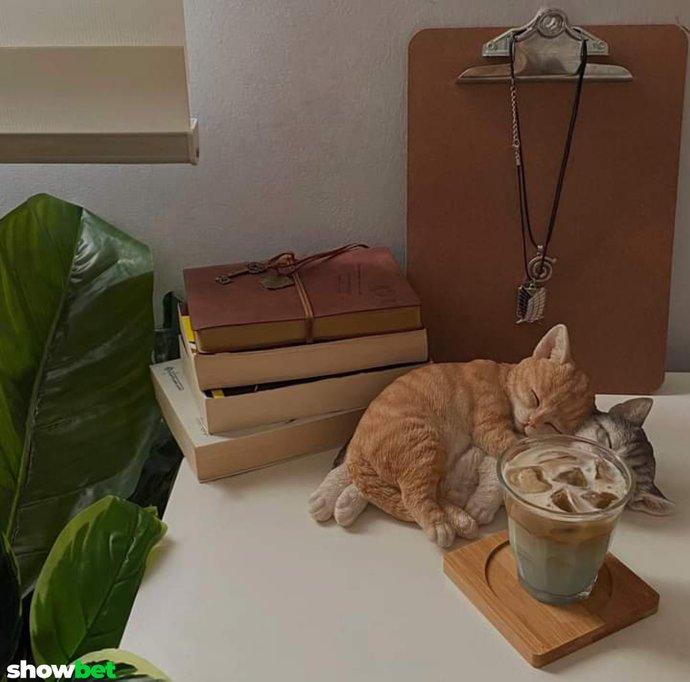 Kedilerin uyuma şekilleri çok tatlı değil mi?
