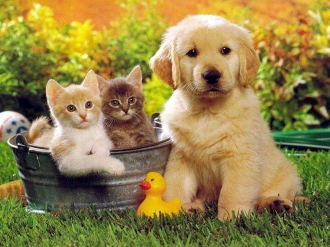 Hayvanlar ile ilgili projelerde yer alma şansını yakaladın mı?