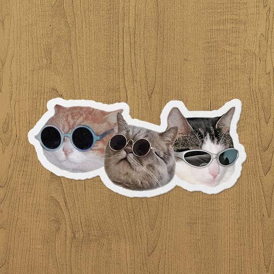 İşyerinde beslediğim sokak kedisi, bu sefer çetesini toplayıp geldi! Yakın zamanda beni kaç kedi bekliyor dersiniz?