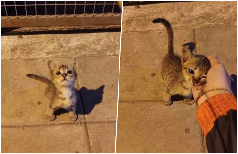 Sokakta gördüğünüz hayvanları sever misiniz?