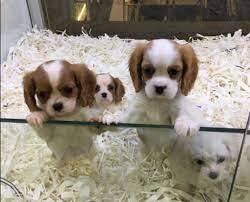 Petshoplarda hayvan satışına nasıl bakıyorsunuz?