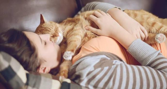 Kediler sevilmek için neden bu kadar ısrar eder?