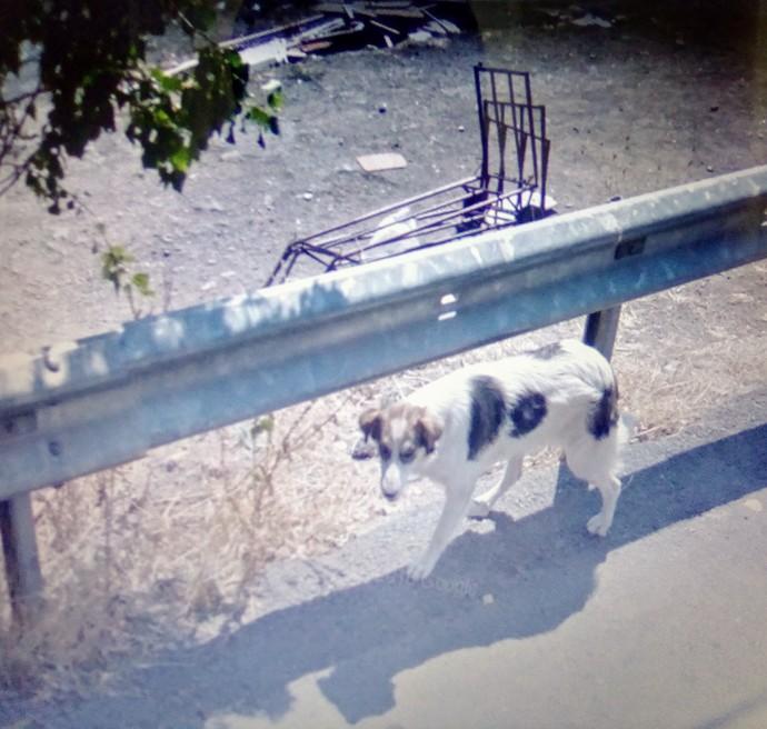 en son görüldüğü yer ataşehir içerenköy tepelik sokak no 25 civarı