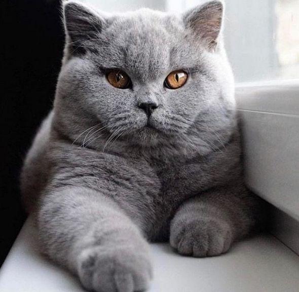 Kediye tuvalet eğitimi verirken nelere dikkat edilmelidir?
