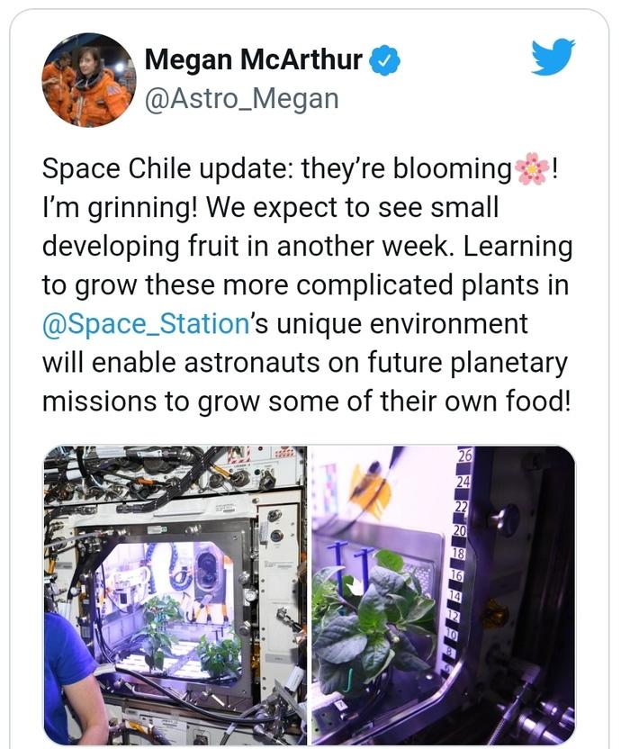 Biber fideleri uzayda çiçek açtı. Sizce bu insanlığı -dünyayı nasıl etkiler?