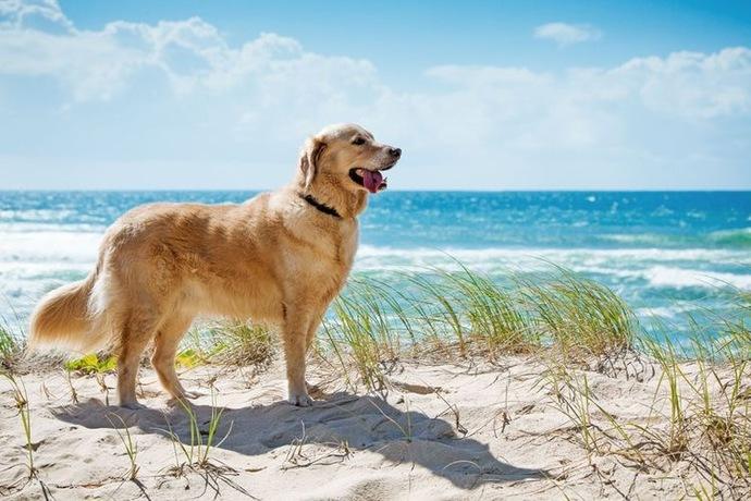 Evcil hayvan sahiplenecek olsanız hangi hayvanı sahiplendirdiniz?