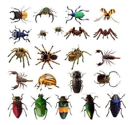 Böcekleri sever misiniz böcekler hakkında ne düşünüyorsunuz 😂 😂 ?