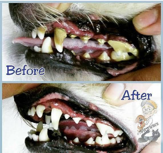 Evcil dostlarınızın diş ve tırnak bakımına dikkat ediyor musunuz?