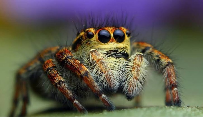 Bir günlüğüne böcek olma şansınız olsa hangi böcek olurdunuz?