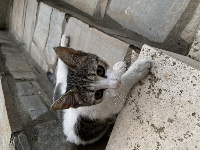 Sokakta kediler saldırırken kurtardım, dükkanın kedisi olacak. Adı ne olsun?