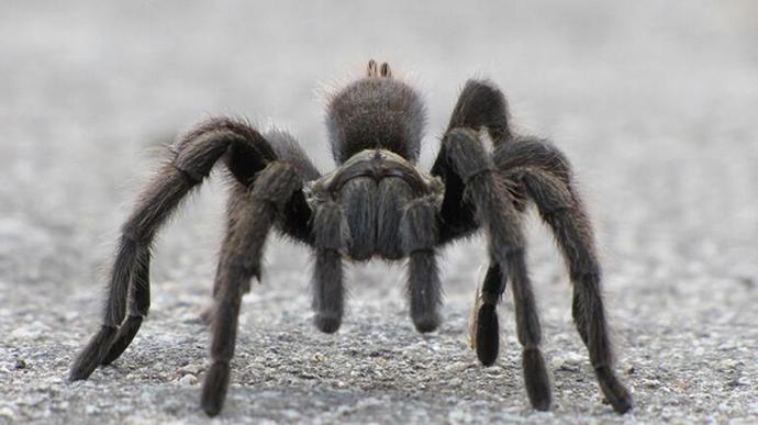 (anket) Hangi hayvan daha korkunç ve ürkütücü?