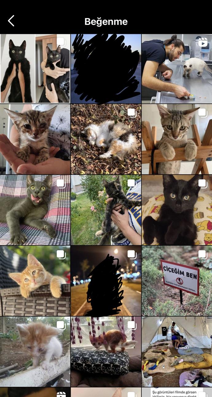 Sosyal medyada sokak hayvanları hakkında haberleri takip eder misiniz?