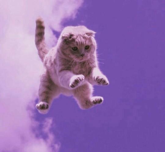 Kedim sürekli uçmak istiyor ne yapmalıyım?