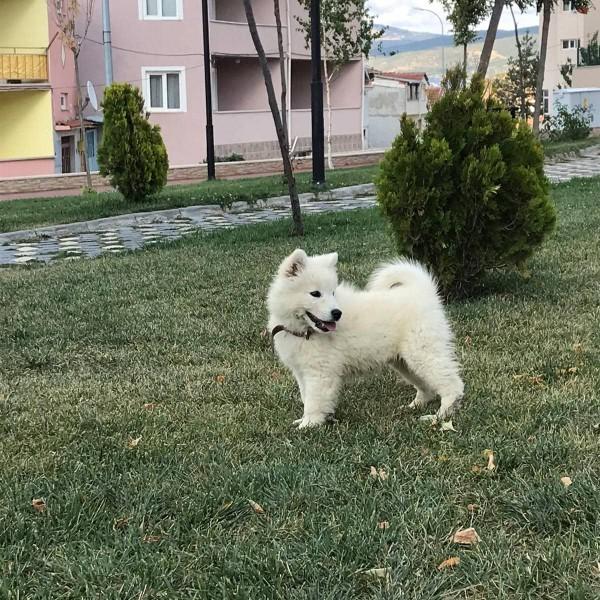 Köpeğimin ismi ne olsun isim bulamadım?