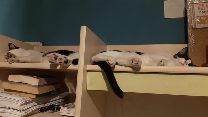 Kedilerim nasıllar?