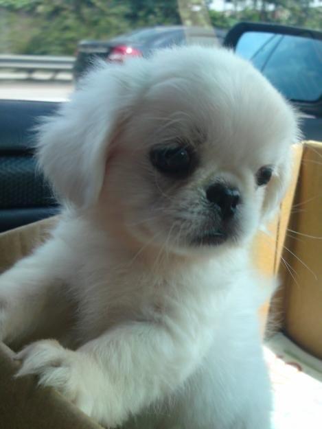 Yeni köpek sahiplendim, sizce ismi ne olmalı?