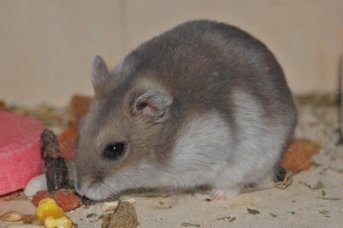 Hamsterlar hakkında bilgisi olan var mı?
