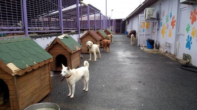 Hayvan barınaklarını ziyaret ediyor musunuz?